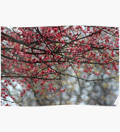 Spring Has Sprung Photographic Watercolor Poster