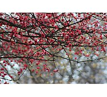 Spring Has Sprung Photographic Watercolor Photographic Print