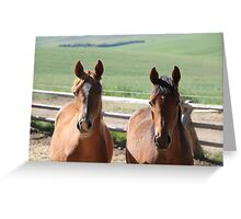 Horse Friends  Greeting Card