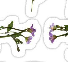 Chickweed Willowherb - Epilobium  alsinifolium Sticker