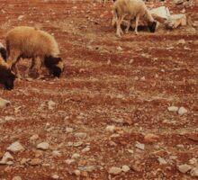 Herd of Sheep Sticker