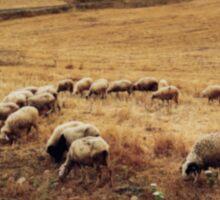 Shepherd With Herd of Sheep Defocused Sticker