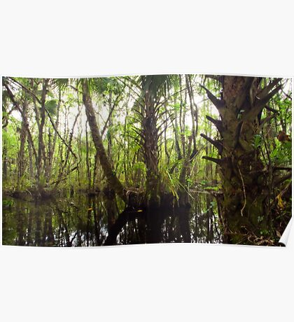 Mystic Swamp - Fakahatchee Strand Poster