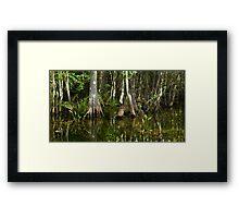 Stillness of the Swamp Framed Print