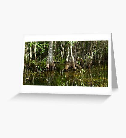 Stillness of the Swamp Greeting Card