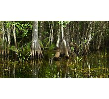 Stillness of the Swamp Photographic Print