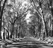 Tree Tunnel by Tracy Riddell