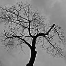 Cold Gray 1st Day Of Spring by pmarella