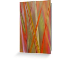 Abstract Flax Plant Greeting Card