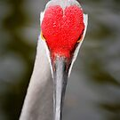 Hearts in Nature by Tracey Hampton