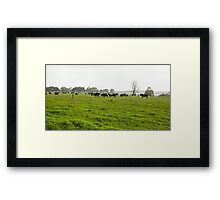 Green Meadow Landscape with Black Cows Framed Print
