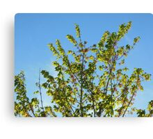 Nature-The Tree Outside Canvas Print