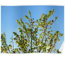 Nature-The Tree Outside Poster