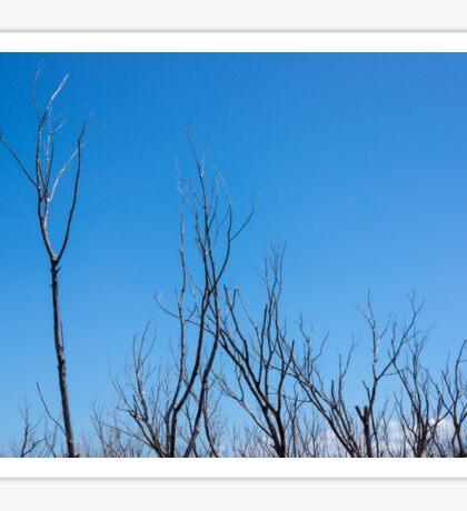 Bare branches Sticker
