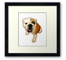 Fun Lovin' Bulldog! Framed Print