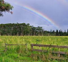 Find your pot of gold by Tracy Riddell