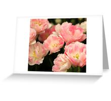 Pink Marshmallow Tulip Bunch Greeting Card