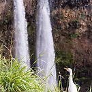 Egret at Wailua Falls by Tracy Riddell