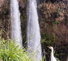 Egret at Wailua Falls by Tracy Riddell