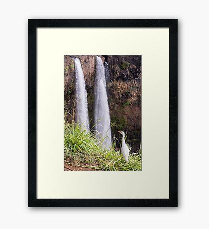 Egret at Wailua Falls Framed Print