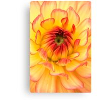 Springtime Golden Flower Petals Canvas Print