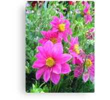 Cosmos Flower Canvas Print