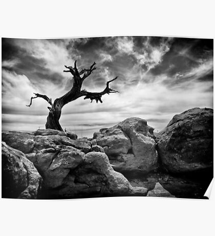 Twisted Tree - Canyonlands National Park, Utah Poster