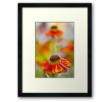 Colourful Springtime Flower Abstract Framed Print