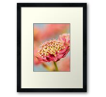 Soft Pink Flower Abstract Framed Print