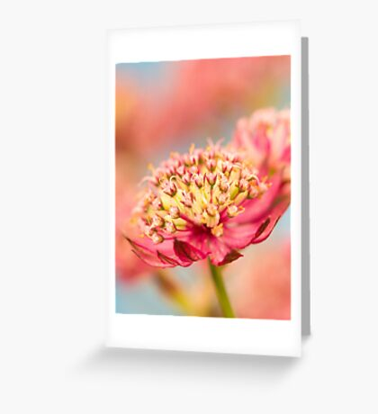 Soft Pink Flower Abstract Greeting Card