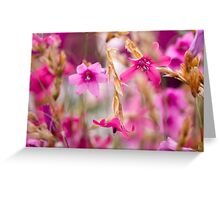 Pink Toned Spring Meadow Greeting Card
