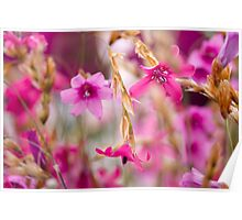 Pink Toned Spring Meadow Poster