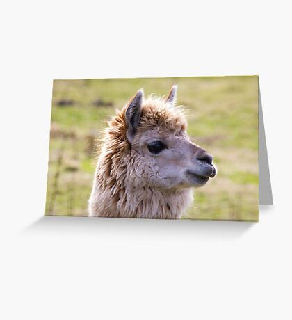 Sunshine Llama Greeting Card