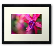 Pink Fuchsia Flower Abstract  Framed Print