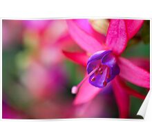 Pink Fuchsia Flower Abstract  Poster