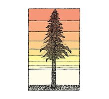 Coastal Redwood Sunset Sketch Photographic Print