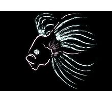 Siamese Fighting Fish Photographic Print