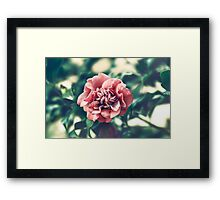 A Pink Flower in a Green World Framed Print