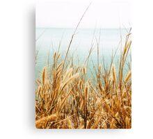Grass By The Ocean Canvas Print