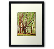 Ancient Oak Framed Print