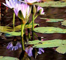 Waterlilies - Emu Park by Kate Trenerry
