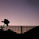 Evening Rose by geof