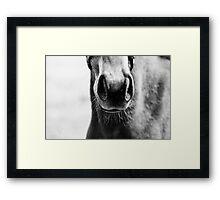 Foal's Nose Framed Print