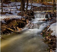 Spring At the Creek Photographic Print