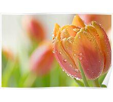 Spring Pastels Poster