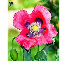 Zions National Park - Bee Mine Photographic Print