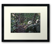Find and Seek Framed Print