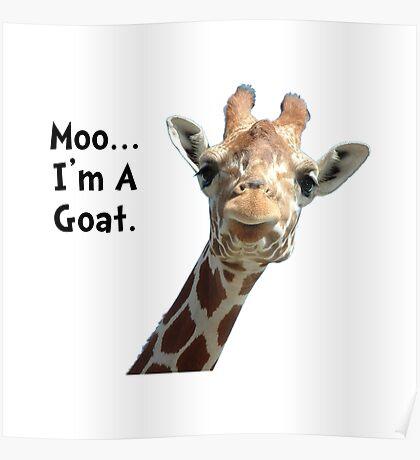 Moo Giraffe Goat Poster