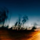 Blurry Trees at Dusk by visualspectrum