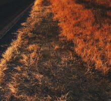 Single Tree in Dry Grassland in Warm Sunset Light Sticker